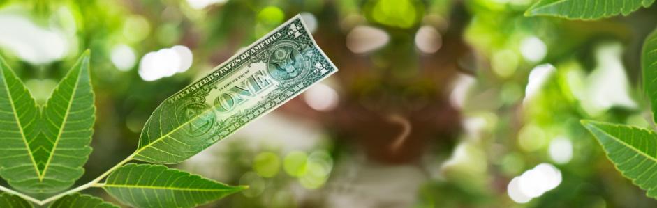 Посади свое денежное дерево!